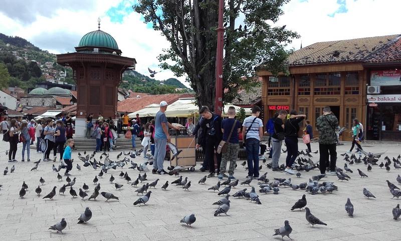 Putovanje Sarajevo golubovi