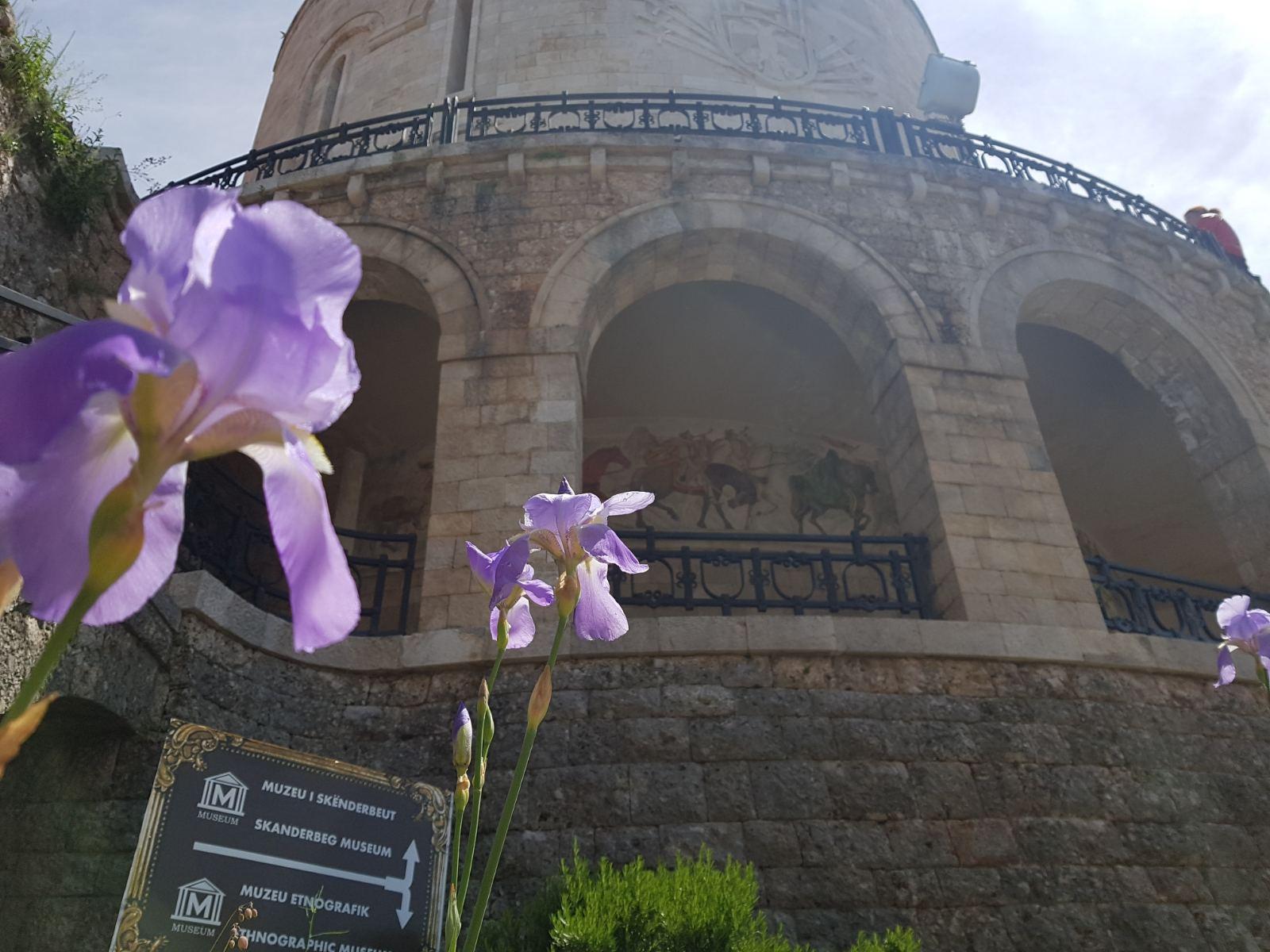 Kruja Albanija cvet
