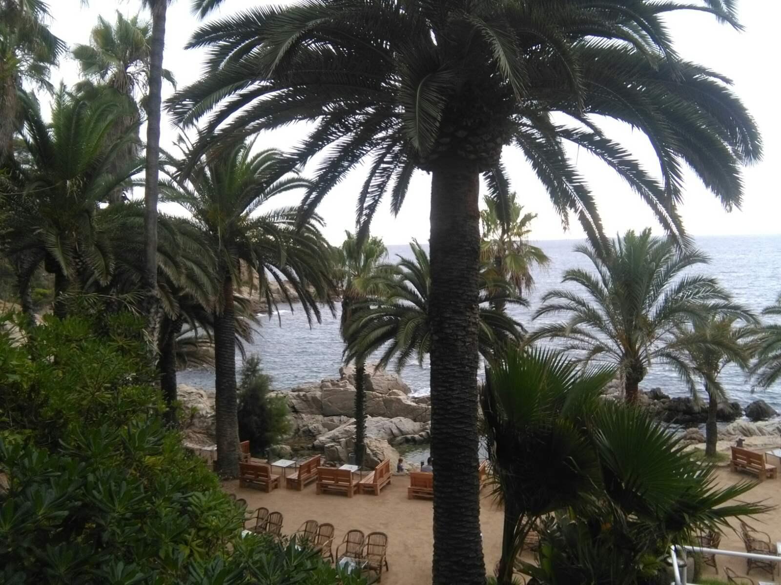 Španija Ljoret de Mar palme